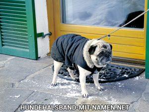 Im Schnee Gassi gehen