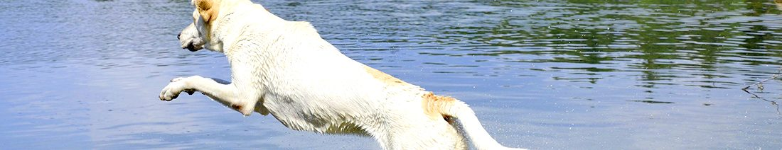 Hund im See