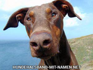 hund mit halsband sprechen film