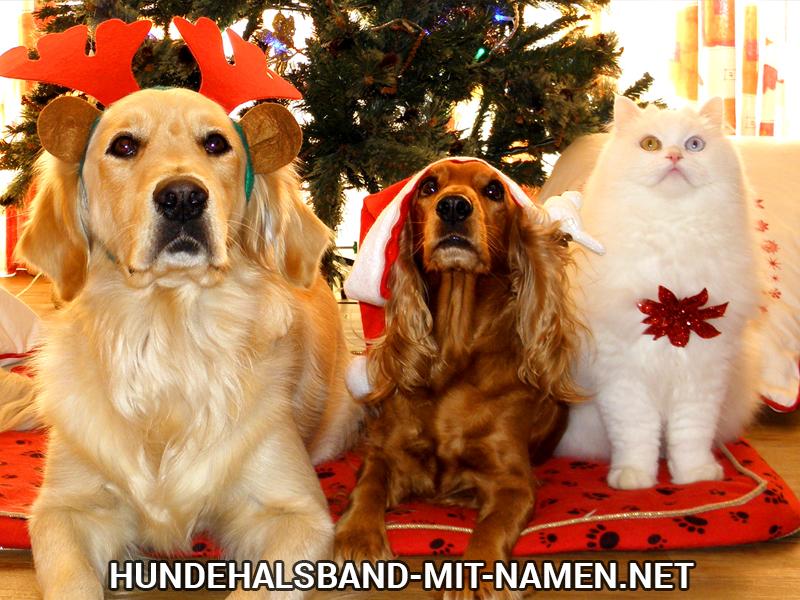 Hunde Geschenke zu Weihnachten | Hundehalsband mit Namen