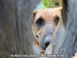 Hundespiele Förderung