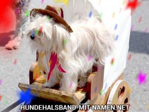 Faschingskostüm Hund