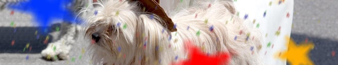 Karneval Kostüm Hund