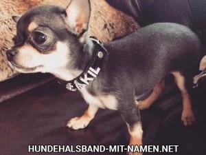 Hundehalsband selbst gestalten