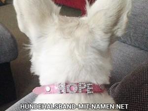 Selbstgestaltete Hundehalsbänder