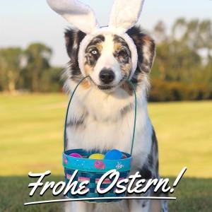 Hunde Ostern