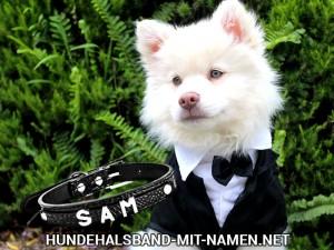 Hundehalsband Hochzeit