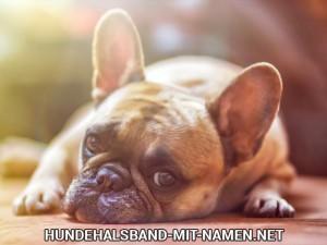 Normaltemperatur vom Hund