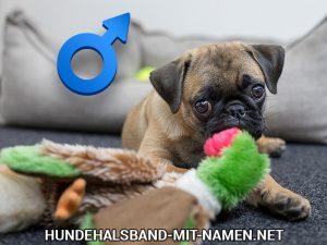Top 10 der lustigen Hundenamen für Rüden